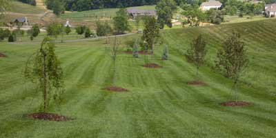Grass Mowing Services in Johnson City, Tennessee